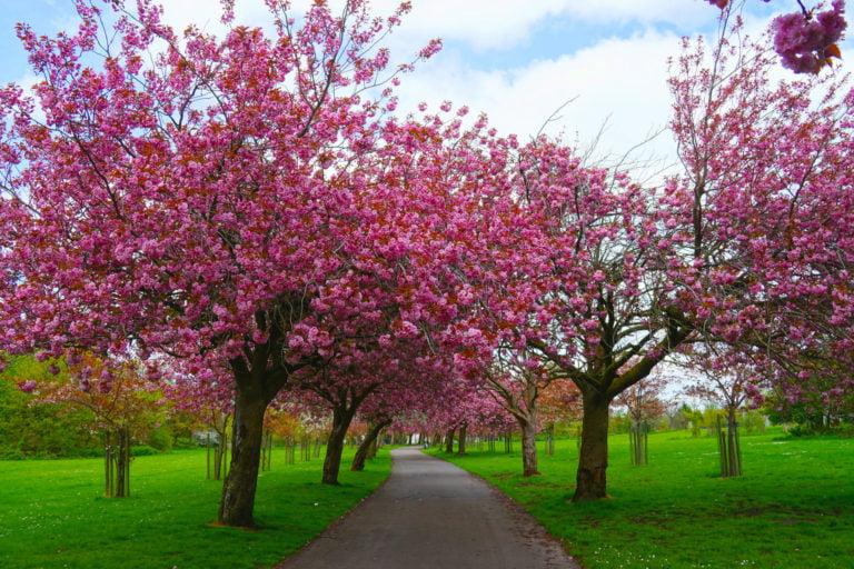Wavertree Botanic Gardens In Liverpool